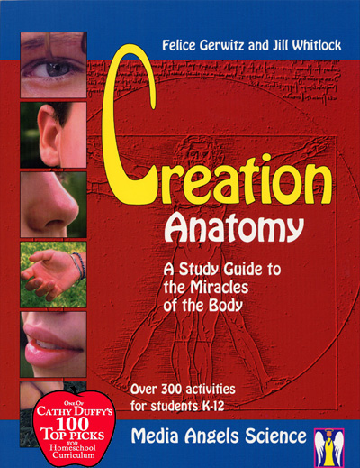 Creation Anatomy Download